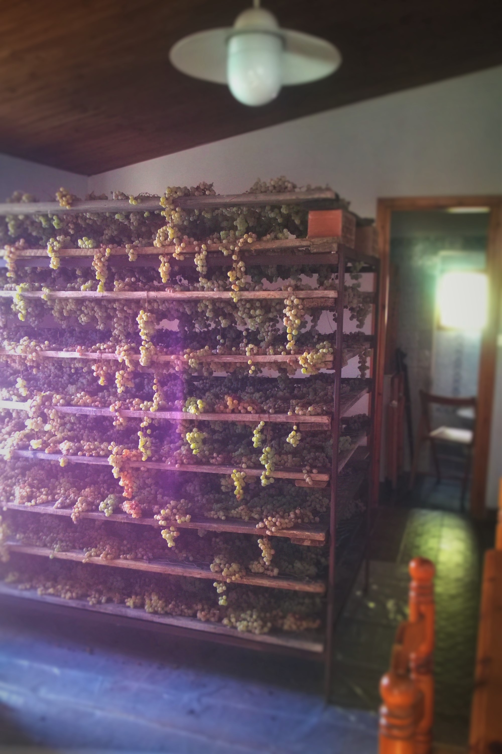 Grapes drying in the middle of the house