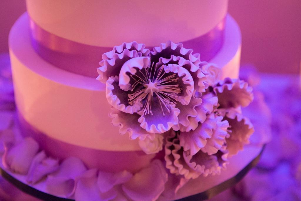 purple-sugar-peony-close-up-laura-christin-1024x683