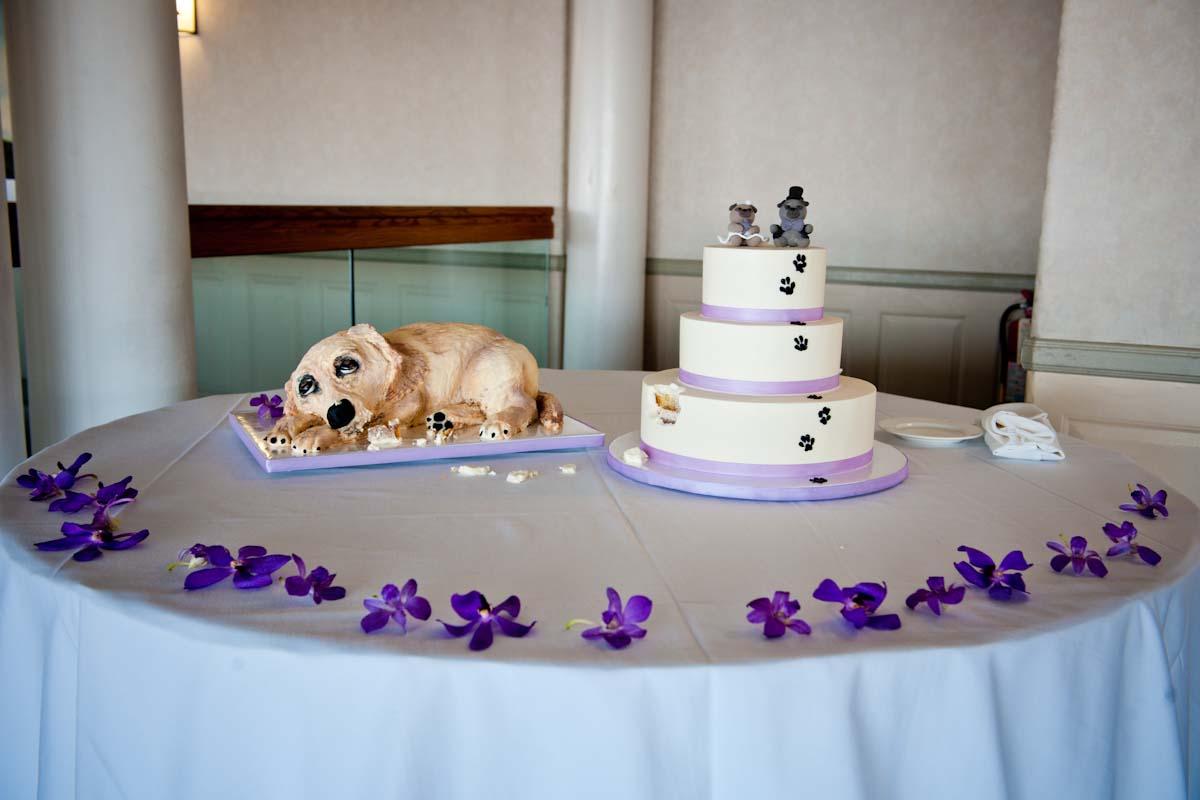 tina-u-dog-eating-cake