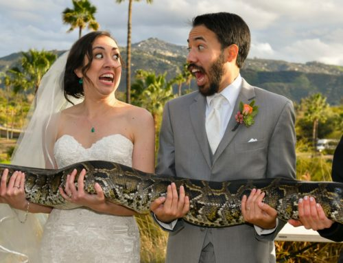 Stephanie and Sam's Exciting Safari Park Wedding